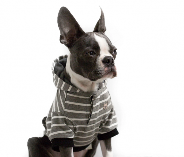 Barkholic Dog Sweater Hoodie in Grayson Stripe - Boston Terrier