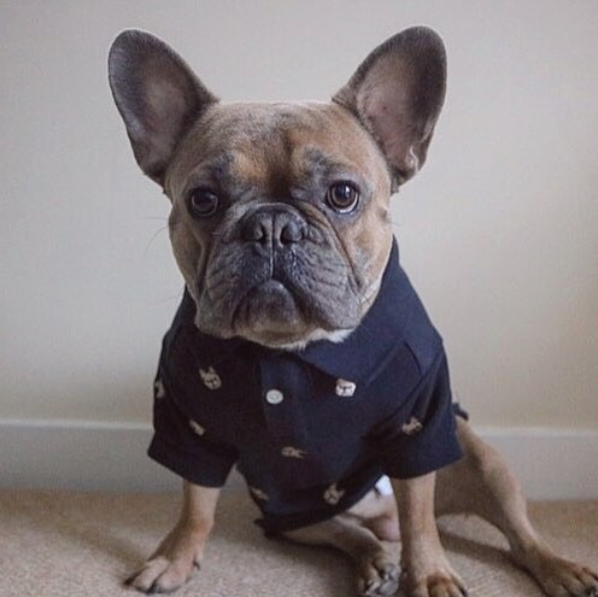 Barkholic Dog Polo Shirt in Navy - Model1