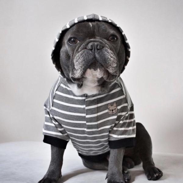 Barkholic Dog Sweater Hoodie Grayson in Gray - Model1