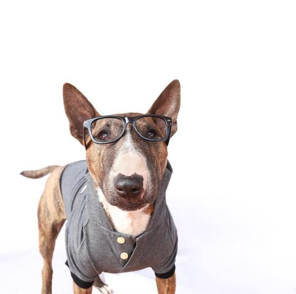 Barkholic Dog Sweater Hoodie in Gray - Model1