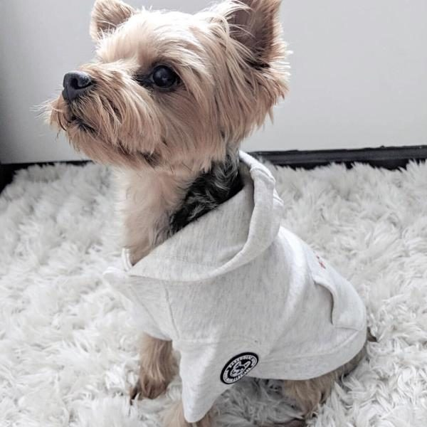 Barkholic Dog Sweater Hoodie Cotton Candy in White - Model1
