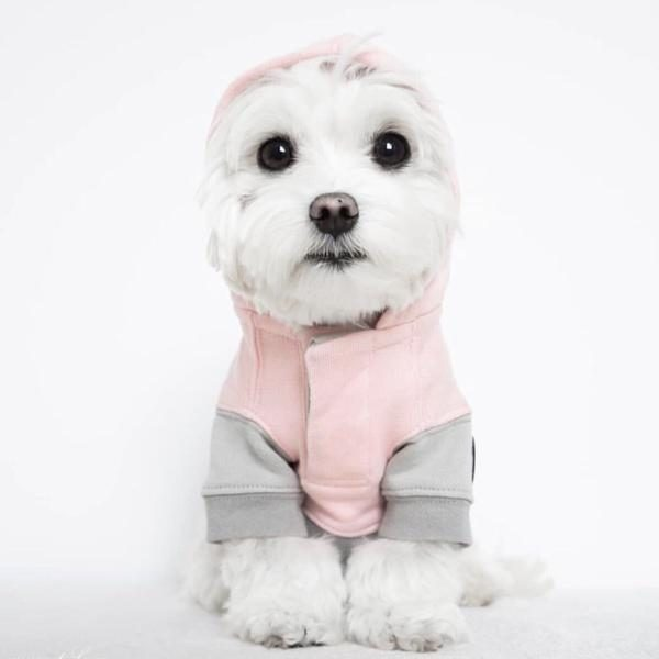 Barkholic Dog Sweater Hoodie Lena in Pink - Model1