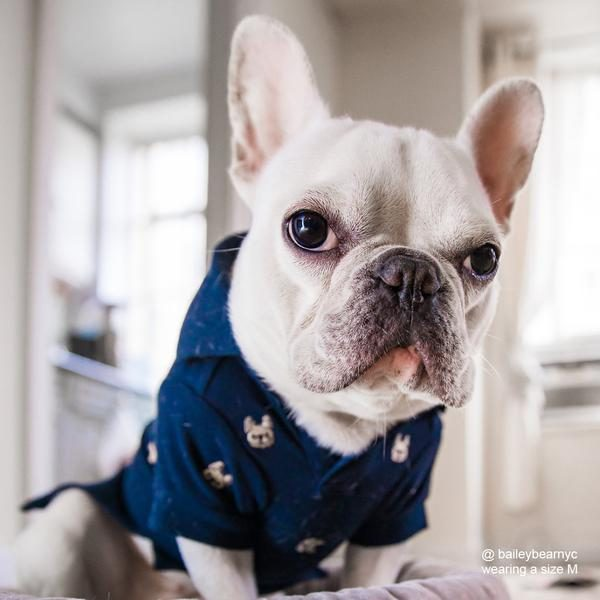 Barkholic Dog Polo Shirt in Navy - Model2