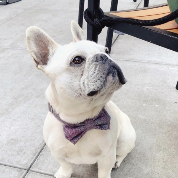 Barkholic Dog Bow Tie Francis Frenchie